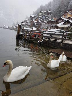 Poveste de iarna in Hallstatt, Austria