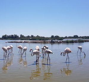 Delta Ronului - Camargue, Franta